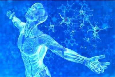 Stammzell-Forschung bei Querschnitts-Lähmung