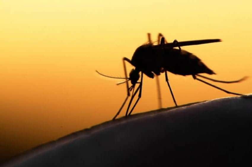 Mücken: Mückenabwehr