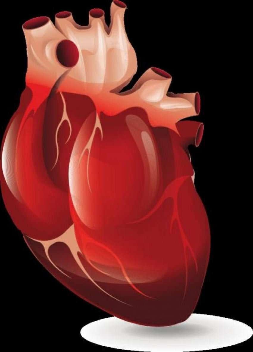 Herzmuskelentzündung (Myokarditis): Ursachen (Teil 2)